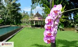 location villa bali bamboo 08