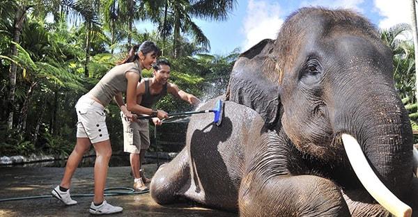 Baignade-elephant-Bali