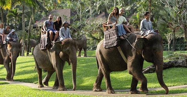 Balade dos elephant Bali