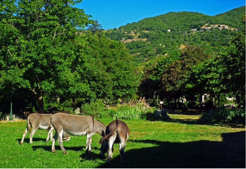 Randonnée Mas Corbières - Les Plantiers