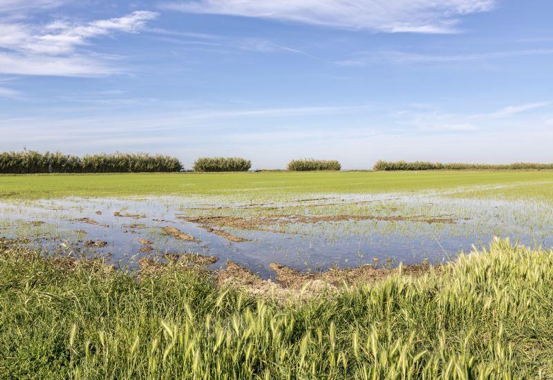 Visite d'une rizière et départ