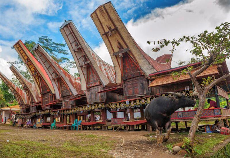 Mawa – Toraja