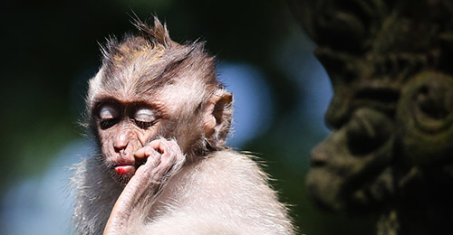 Zoo de Bali - Nuit au Zoo
