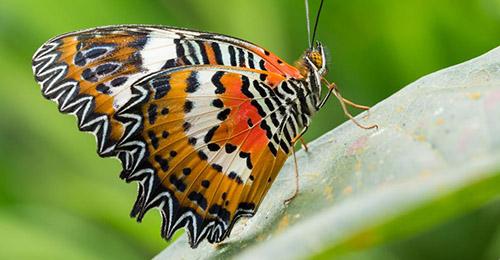 Parc aux papillons