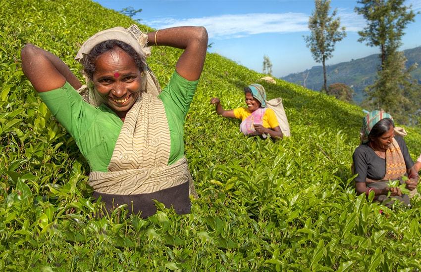 Sri Lanka Reise: Bestseller im Winter