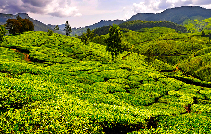 Munnar - Backwaters
