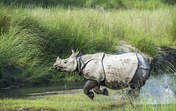 Jorhat – Kaziranga national parc
