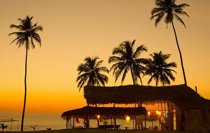 Wildernest - Goa