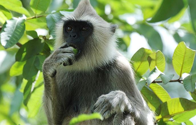 Uda Walawe–Parc national de Yala