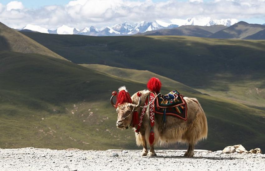 Jele Dzong - Jangchulakha