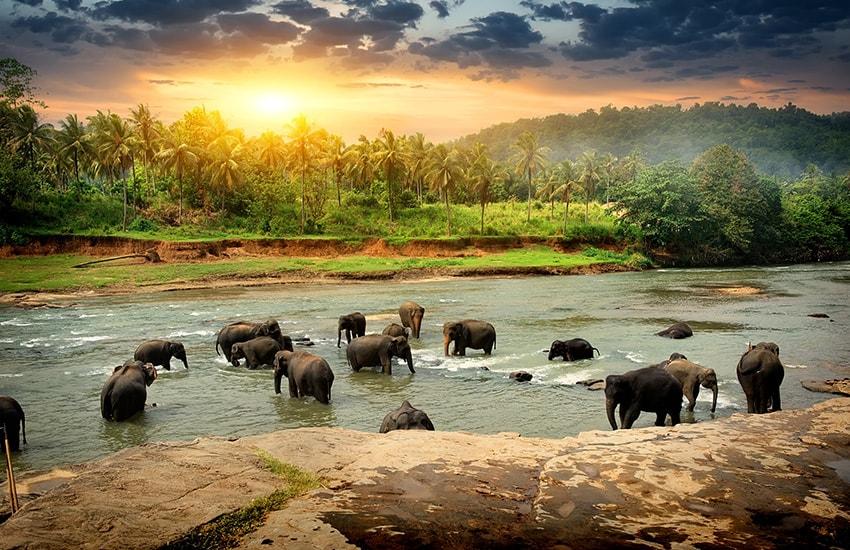 Les essentiels du Sri Lanka en été