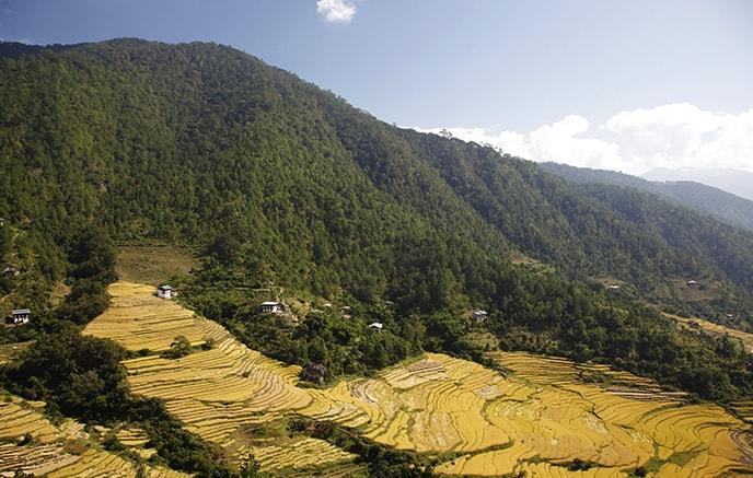 Thimphu - Wangdue (1300 m )