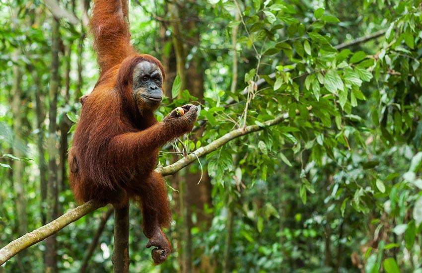 Sumatra Reise für echte Abenteurer