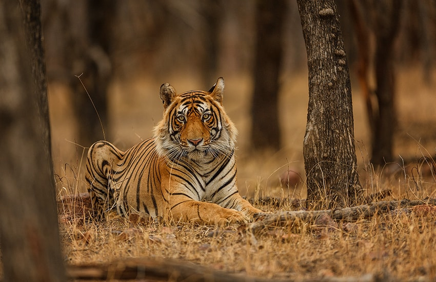 Madhya Pradesh: Paläste & Tierwelt