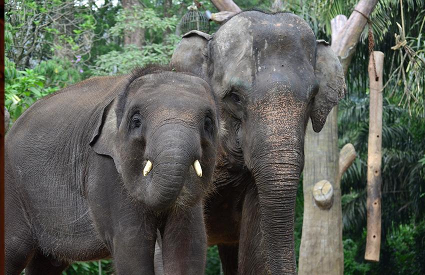Sumatra für echte Abenteurer