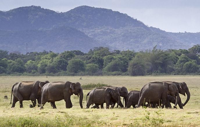 Negombo – Pinnawela – Kandy