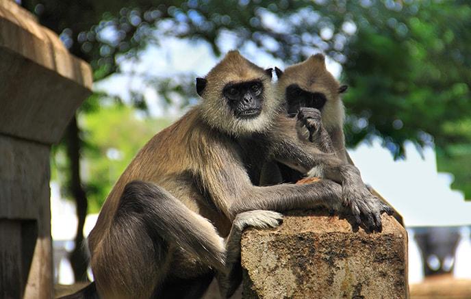 Trincomalee – Anuradhapura