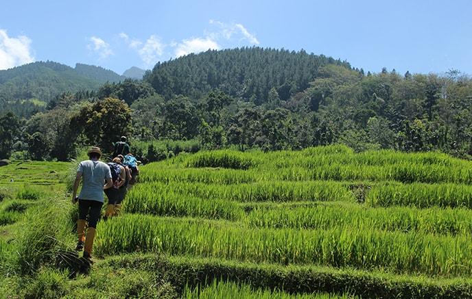 Knuckles Range–Kandy