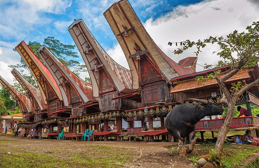 De Bali au pays Toraja