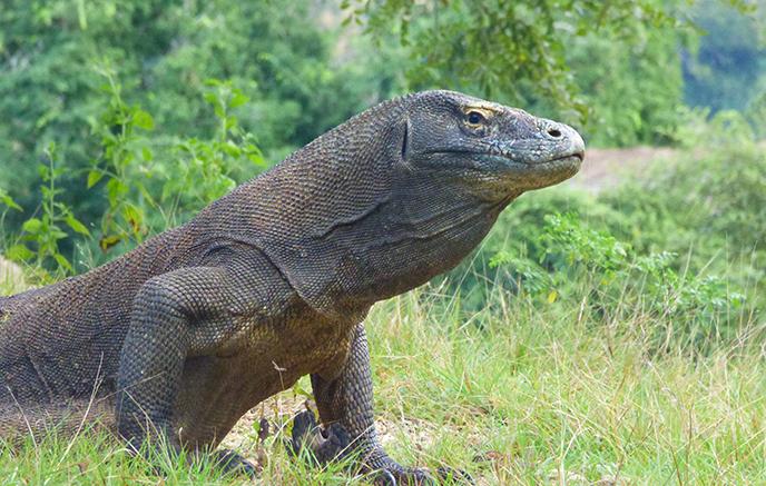 Croisière dans le parc national de Komodo