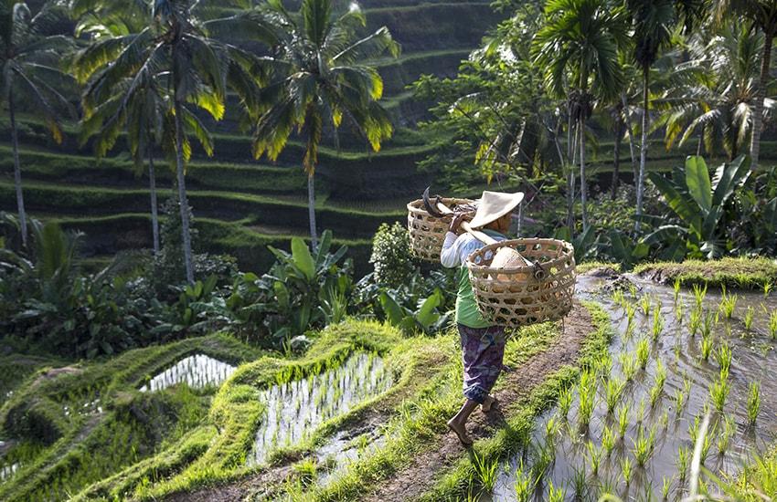 Combiné Singapour - Bali