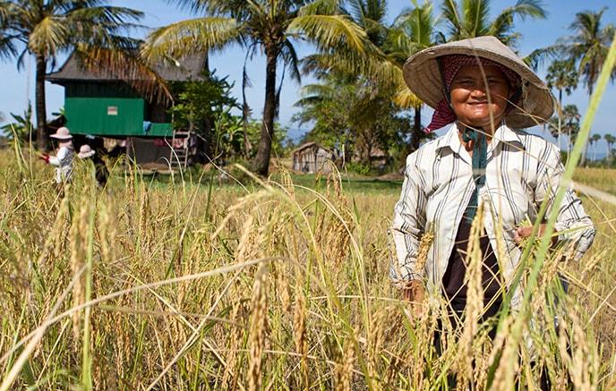 Siem Reap  - Battambang