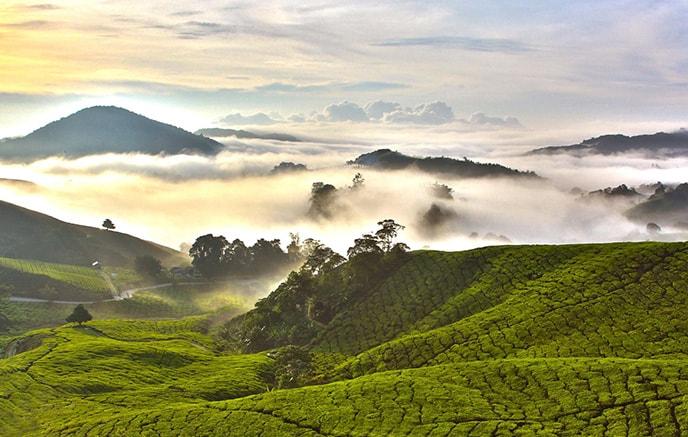 Cameron Highlands – Ile  de Pangkor