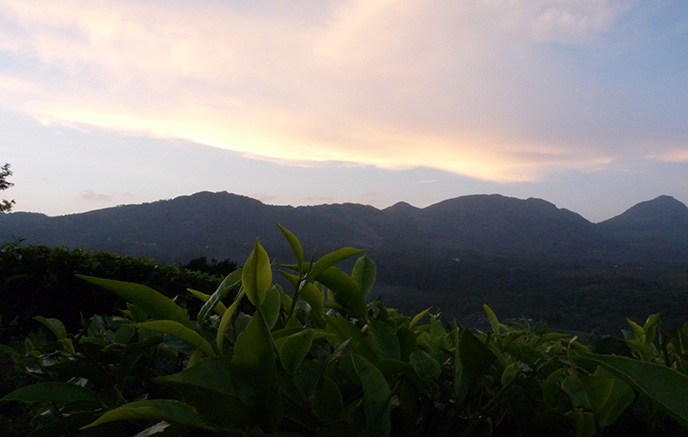 Kochi – Munnar