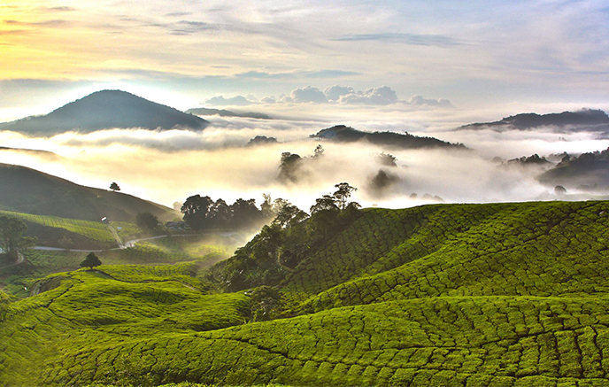 Kuala Lumpur - Cameron Highlands