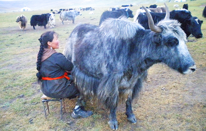 Image La vallée de l'Orkhon à cheval