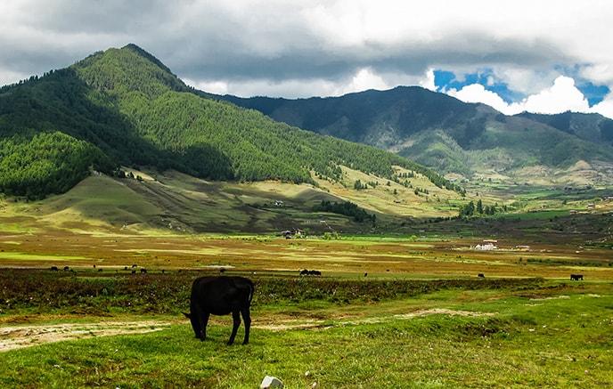 Punakha – Gangtey