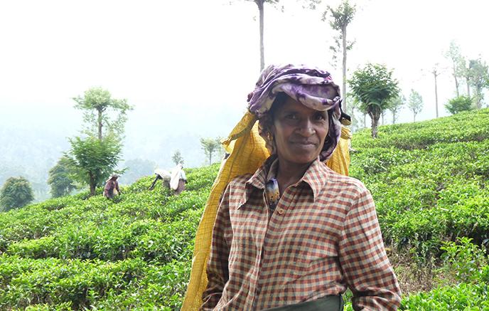 Nuwara Eliya – Kandy