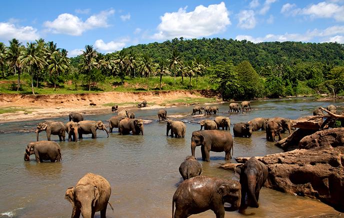Parc national d'Uda Walawe – Mirissa