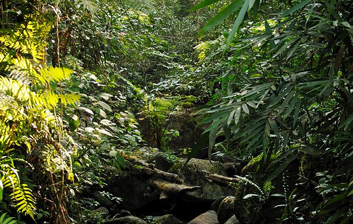 Sinharaja–Parc national d'Uda Walawe