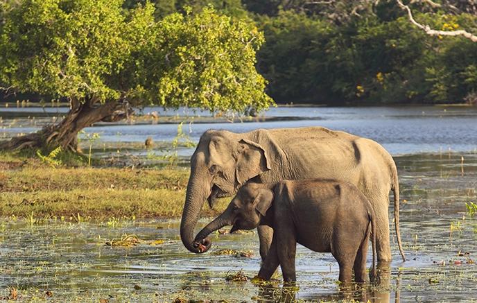 Parc national d'Uda Walawe – Ella