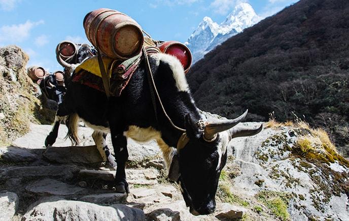 Tharepati – Gang hill (2550m)