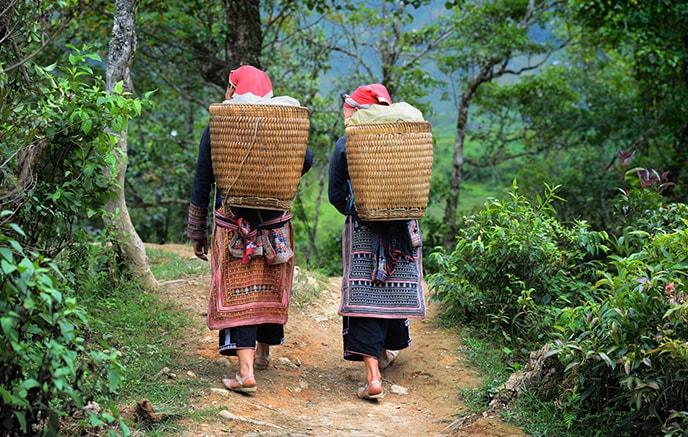 Image Treks entre rizières et ethnies