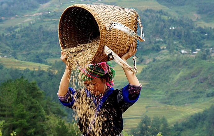 Sapa, Randonnée jusqu'au village de Ban Ho