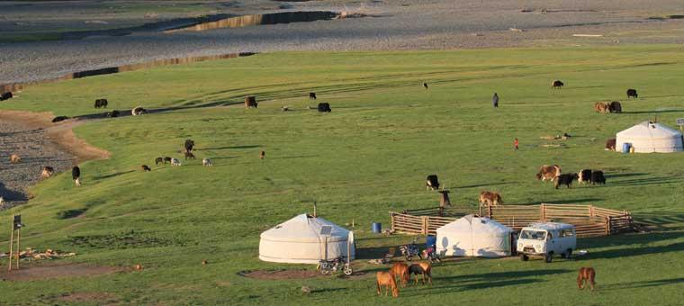 elevage en Mongolie