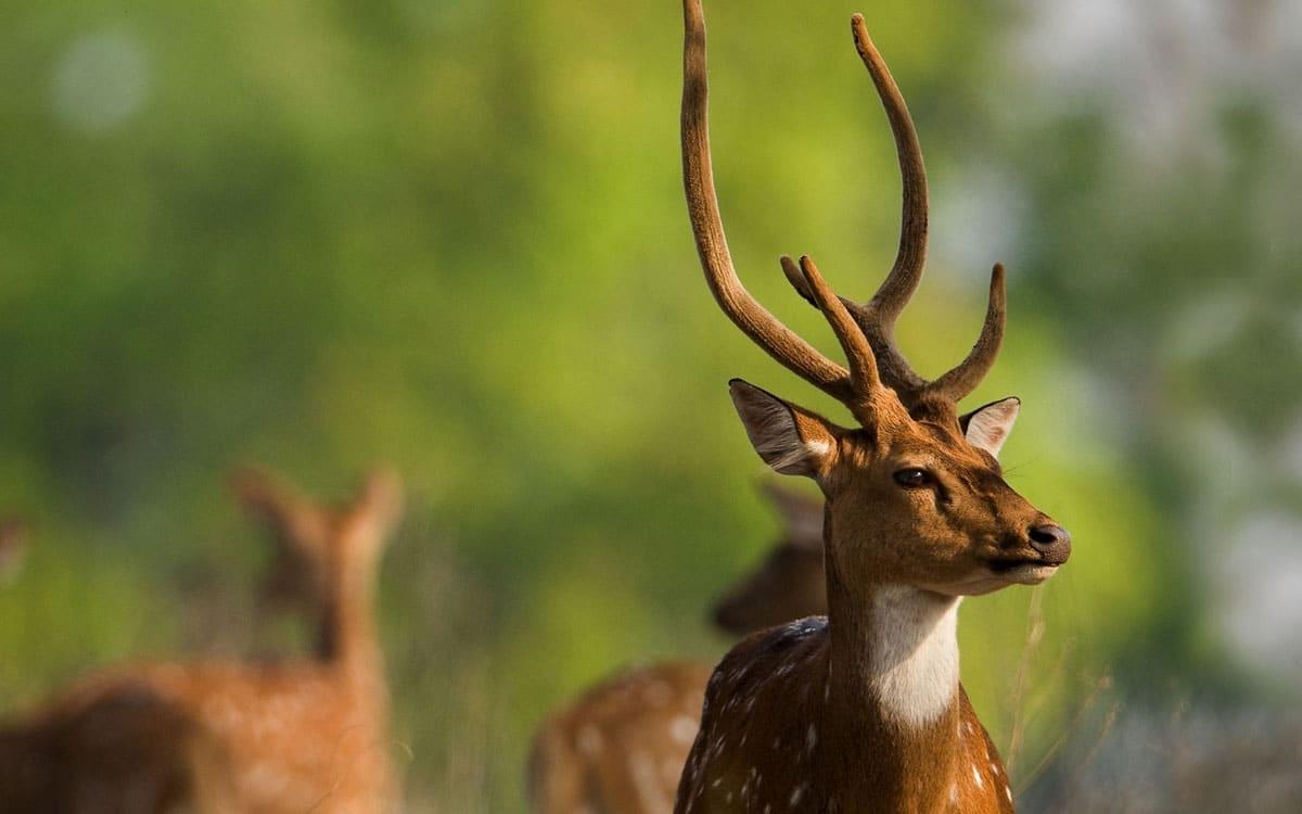 wildlife tourism in Madhya Pradesh