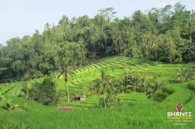 Jatiluwith Bali