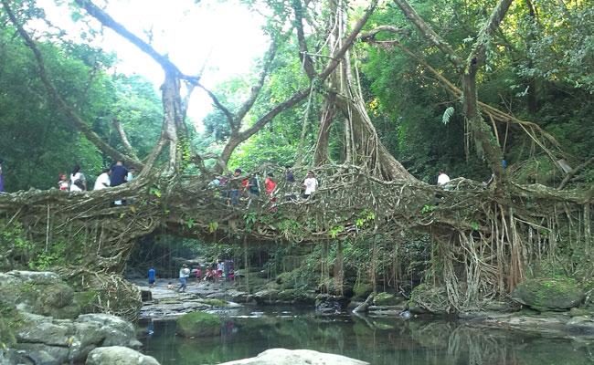 living-root-bridge-cherrapunji