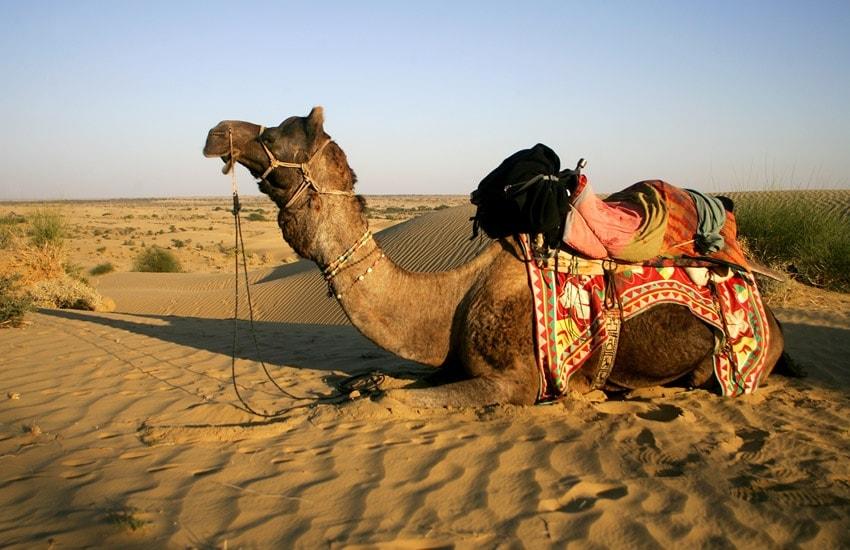 Image Du désert du Thar aux Aravellis