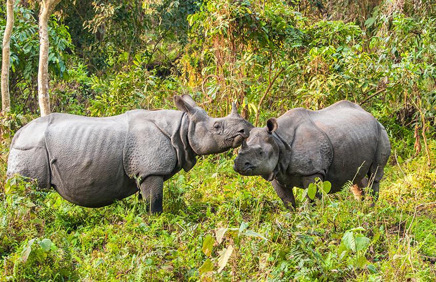 Image Rhinos d'Assam et peuple du Nagaland