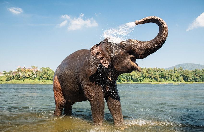 Voyage à pied : En famille sur la piste des éléphants