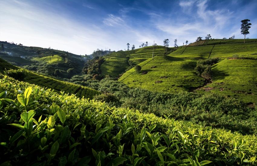 Voyage à pied : Randonnée au pays du thé