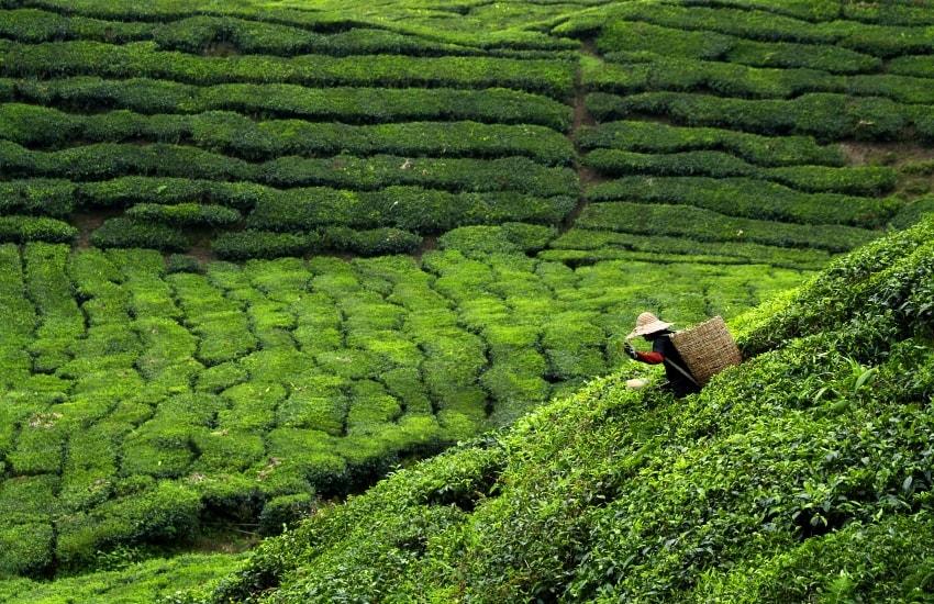 Voyage à pied : Les essentiels de la Malaisie