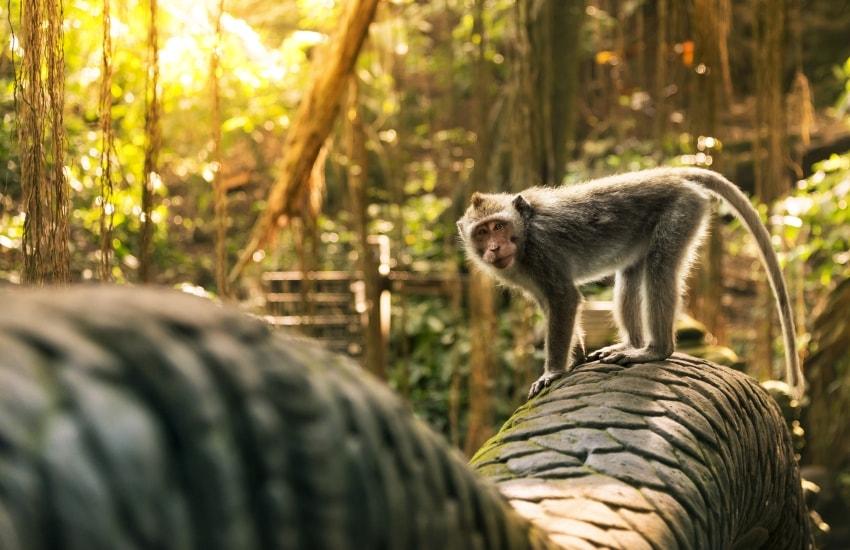 Voyage à pied : Tour d\'horizon à Bali