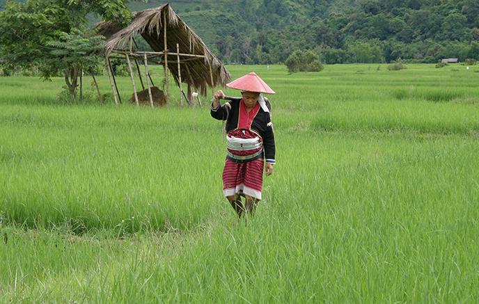 Kengtung, visite des villages Lahushi