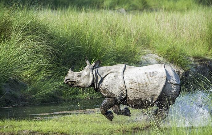 Jorhat – Kaziranga national parc